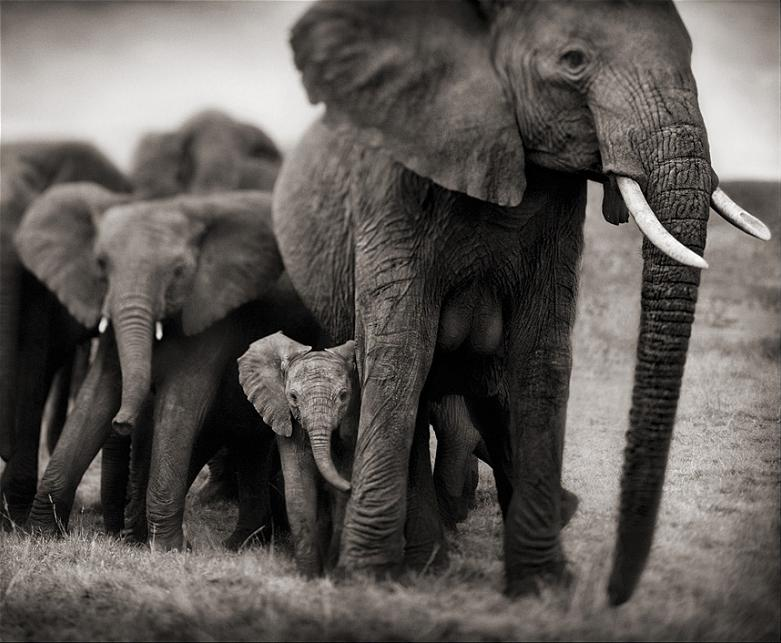 elephant mother and calf baby The 35 Cutest Baby Elephants You Will See Today