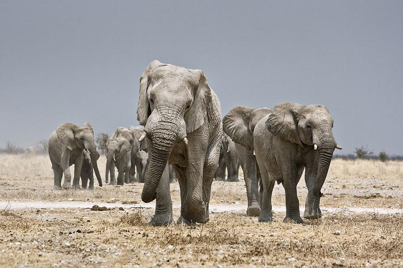 family-of-elephants