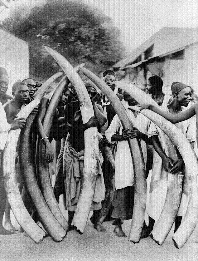 ivory-trade-elephant-tusks