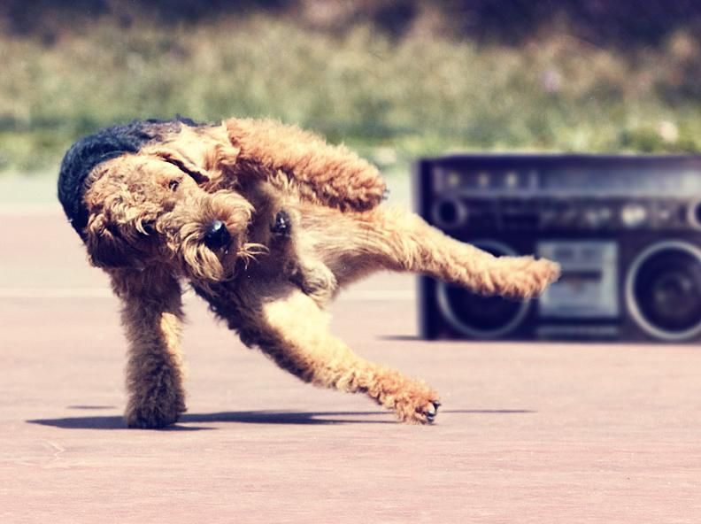 breakdancing dog Picture of the Day: Breakdancing Dog!   Jan. 2, 2011