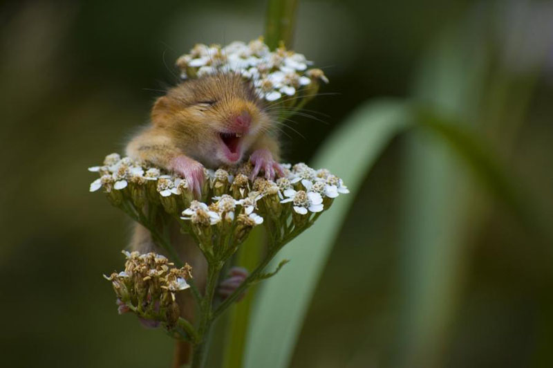 hamster-loves-flowers