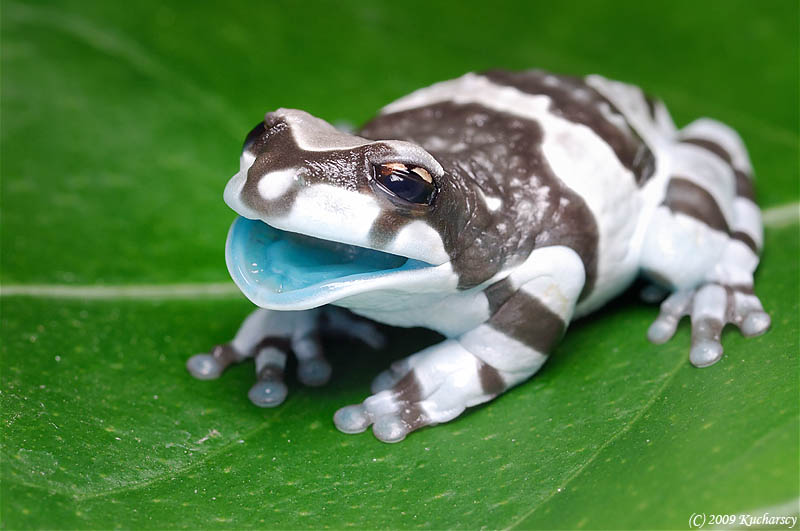 frog closeup 11 10 Reasons Frogs Are Awesome [25 Pics]