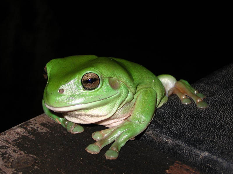 frog closeup 15 10 Reasons Frogs Are Awesome [25 Pics]