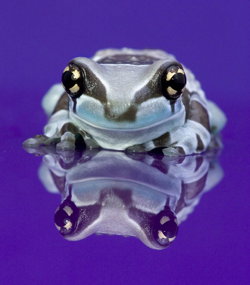 frog closeup 25 10 Reasons Frogs Are Awesome [25 Pics]