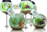 Picture of the Day: The Labyrinth Aquarium