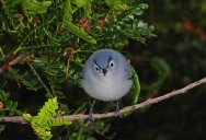 Picture of the Day: Real-Life Angry Bird