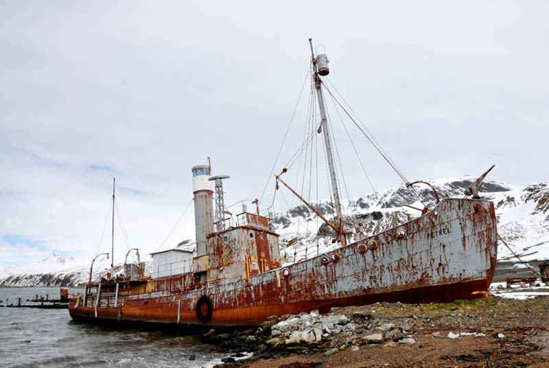 whaler shipwreck at grytviken south georgia 25 Haunting Shipwrecks Around the World
