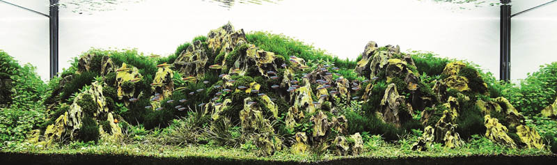 12 may kwan hong kong The Top 25 Ranked Freshwater Aquariums in the World