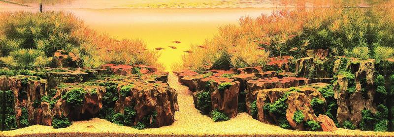2 gold prize zhang jian feng macau The Flowing Fins of Siamese Fighting Fish