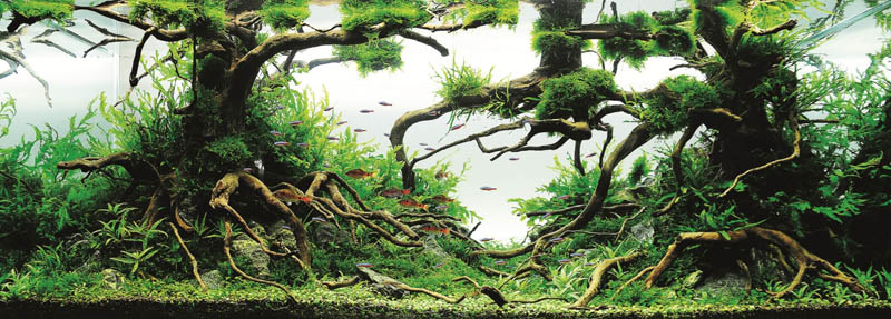 22 michael gw wong hong kong The Top 25 Ranked Freshwater Aquariums in the World
