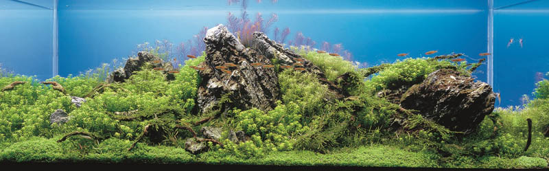 25 junichi itakura japan The Top 25 Ranked Freshwater Aquariums in the World