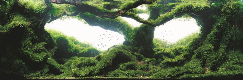 4 silver award yutaka kanno japan The Top 25 Ranked Freshwater Aquariums in the World