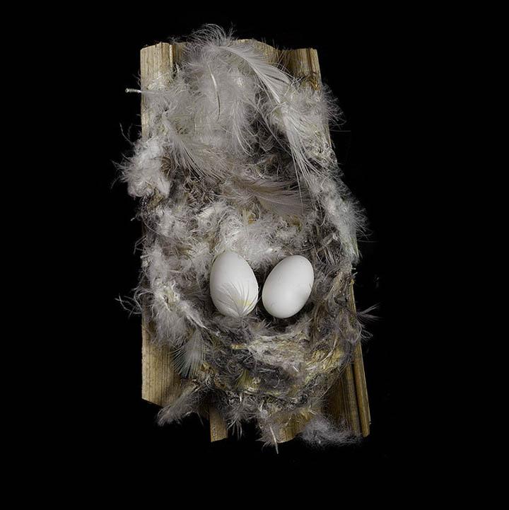 african palm swift sharon beals 25 Stunning Photographs of Birds Nests