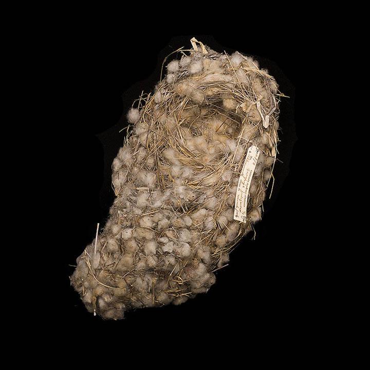 galapagos finch nest sharon beals 25 Stunning Photographs of Birds Nests