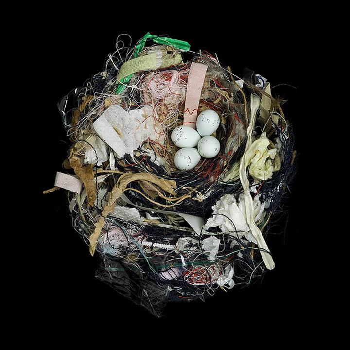 house finch sharon beals 25 Stunning Photographs of Birds Nests
