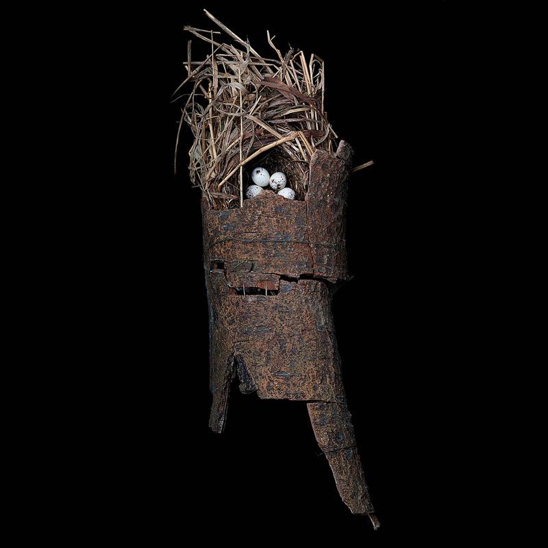 macgillivrays warbler sharon beals 25 Stunning Photographs of Birds Nests