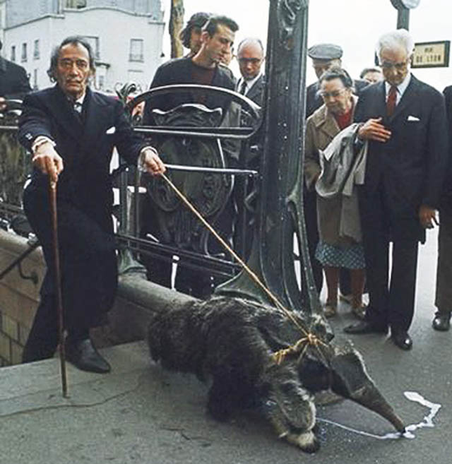 salvador dali walking an anteater This Day In History   May 11th