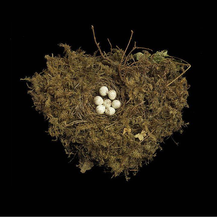 tennessee warbler sharon beals 25 Stunning Photographs of Birds Nests