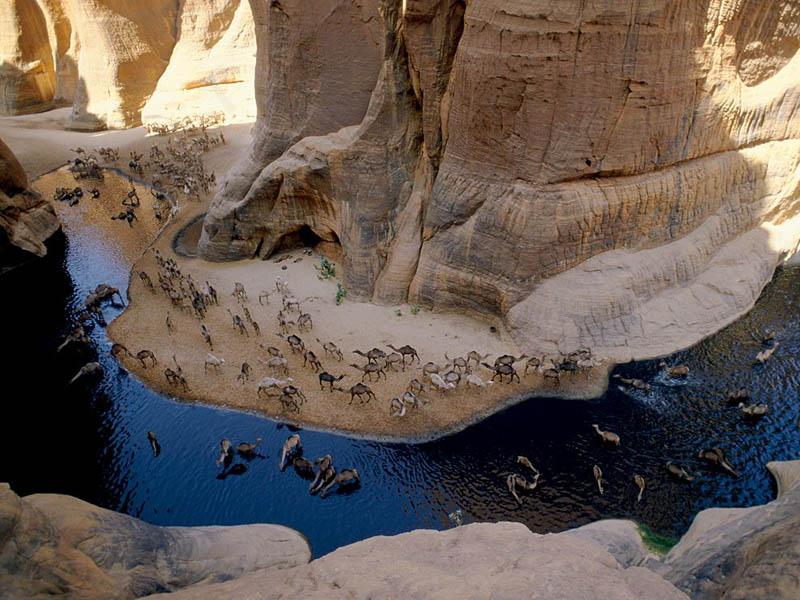 صور أبداعية غايه في الروووووعه!!!! camels-drinking-at-a