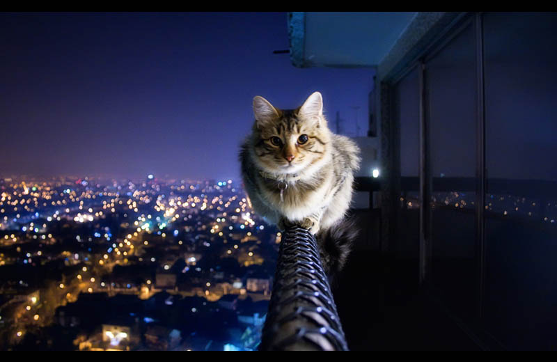 cat siting on ledge of balcony The Top 50 Pictures of the Day for 2011