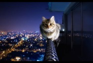 Picture of the Day: Courageous Kitty