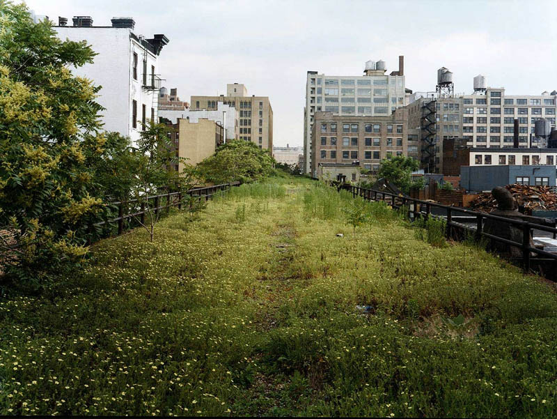 high line covered in plants The High Line: New Yorks Park in the Sky [25 pics]