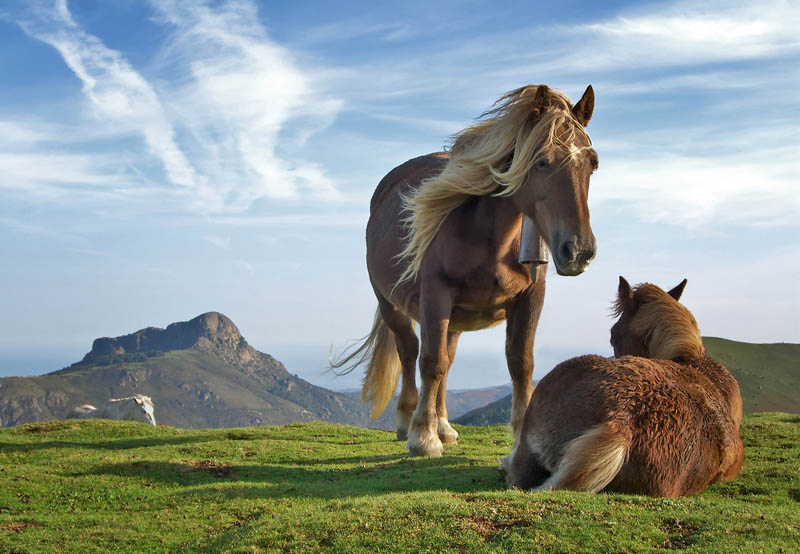 horses relaxing on mountaintop spain Picture of the Day: A Horses Life