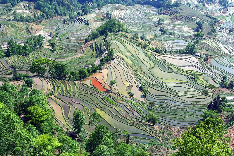 rice terraces 1 25 Unbelievable Photographs of Rice Terraces