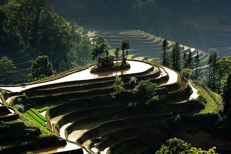 rice terraces 16 25 Unbelievable Photographs of Rice Terraces