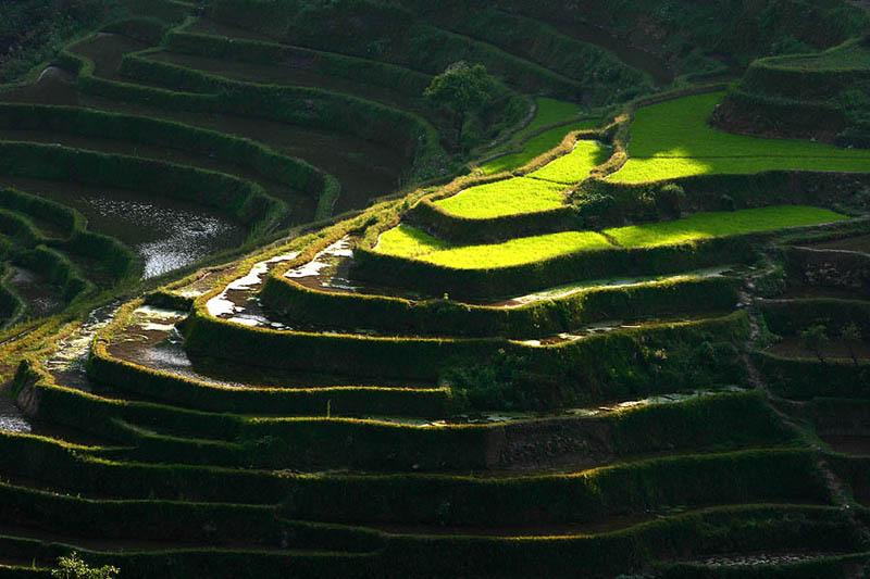 rice terraces 22 25 Unbelievable Photographs of Rice Terraces