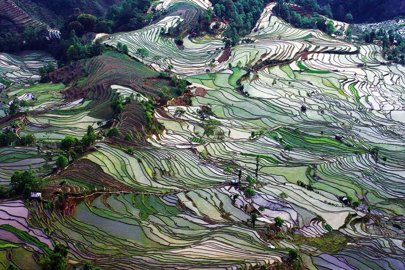 rice terraces 4 25 Unbelievable Photographs of Rice Terraces