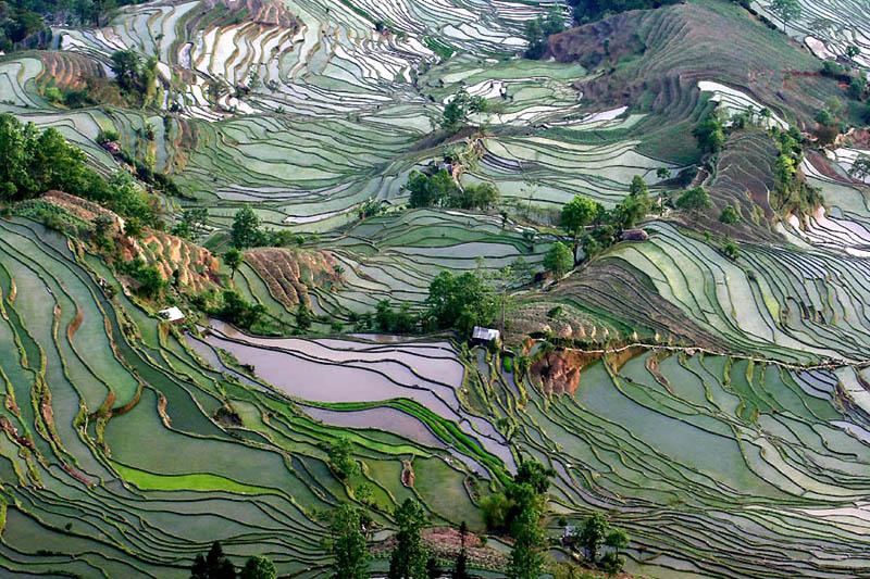 rice terraces 7 25 Unbelievable Photographs of Rice Terraces
