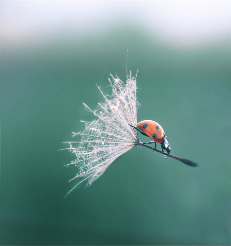 ladybug landing with style Picture of the Day: Ladybug Lands With Style