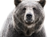 Amazing Animal Portraits by Morten Koldby