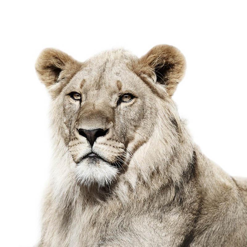 animal portraits by morten koldby 13 Amazing Animal Portraits by Morten Koldby