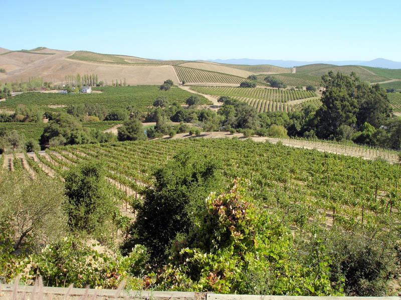 artesa vineyards sonoma valley california 35 Gorgeous Vineyards Around the World