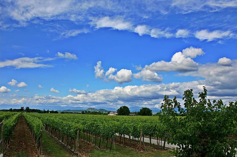 collio fruili venezia giulia italy 35 Gorgeous Vineyards Around the World