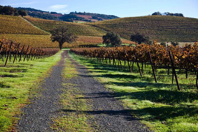 kunde estate vineyards sonoma county california 35 Gorgeous Vineyards Around the World
