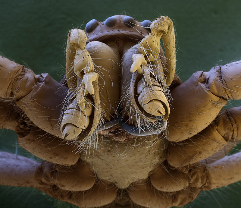 macro spider head electron microscope oliver meckes Incredible Examples of Electron Microscope Photography