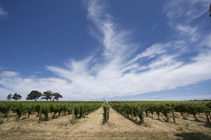 margaret river vineyard western australia 35 Gorgeous Vineyards Around the World
