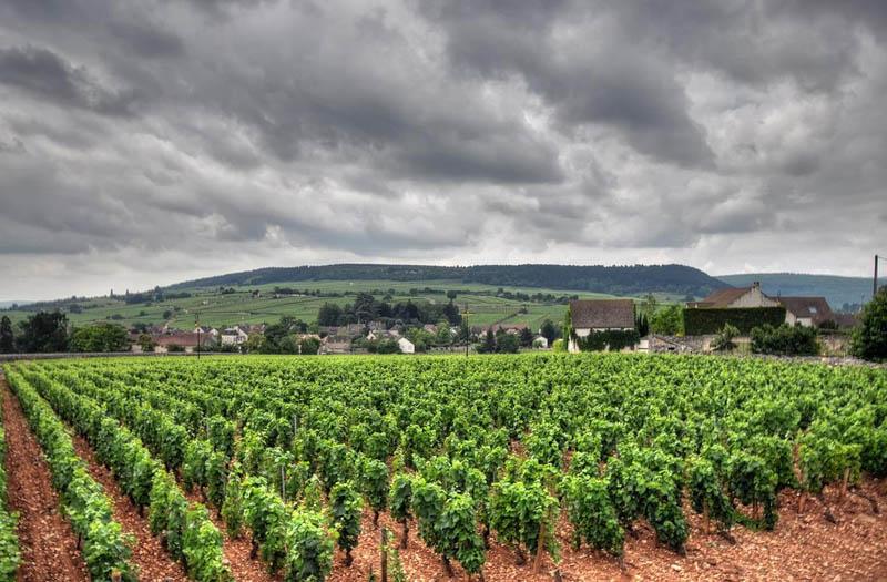 muersault france burgundy eastern france vineyard 35 Gorgeous Vineyards Around the World