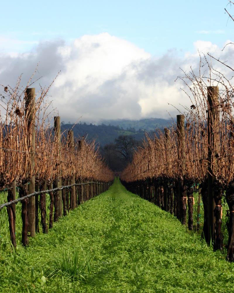 napa valley vineyard cali 35 Gorgeous Vineyards Around the World