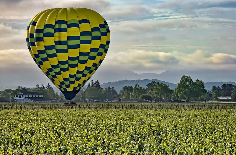 napa valley vineyard 35 Gorgeous Vineyards Around the World
