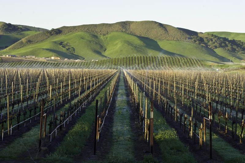 vineyard los alamos santa barbara california The Plants that Fruits Come From