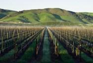35 Gorgeous Vineyards Around the World