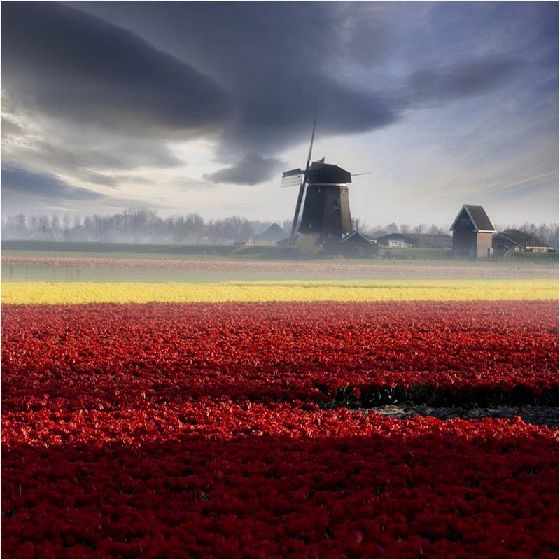 windmill in holland  by adamsalwanowicz Picture of the Day: Holland Daze