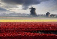 Picture of the Day: Holland Daze