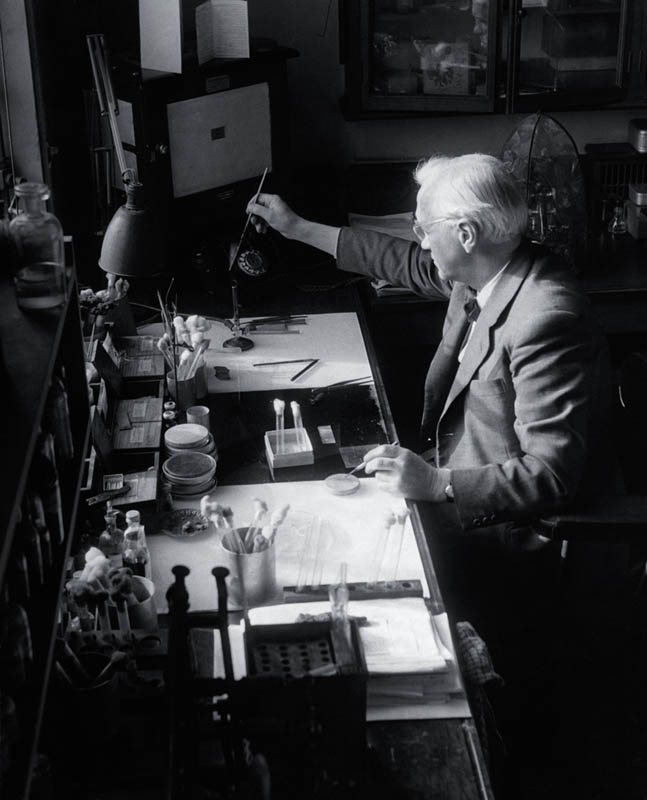 sir alexander fleming in lab This Day In History   September 28th