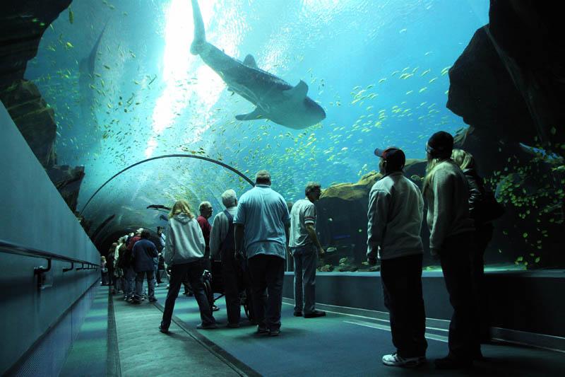 worlds largest aquarium atlanta georgia 15 Cool Custom Fish Tank Headboard for your Bed