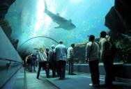 The World's Largest Aquarium [25 pics]